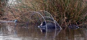 Balıkçı ağlarına takılan sakarmeke kurtarıldı