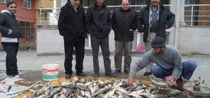 Murat balığı tezgahtaki yerini aldı