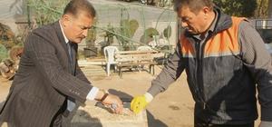 Toroslar Belediyesi, istiridye mantarı üretimine başladı