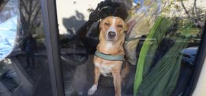 Üç gündür minübüste bırakılan köpek kurtarıldı