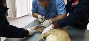 Yaralı sokak köpeği emin ellerde