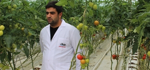 Eksi 40 derecede domates üretiliyor