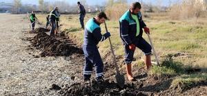 Başiskele'de ağaçlandırma çalışmaları sürüyor