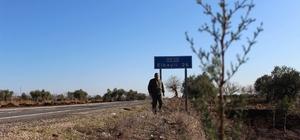 Kilis -Elbeyli Karayoluna 3 bin adet ağaç dikimi başladı