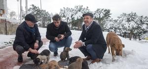 Soğuk havalarda sokak hayvanları için seferberlik