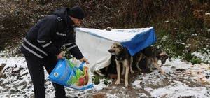 Sapanca Belediyesi, sokak hayvanlarını unutmadı