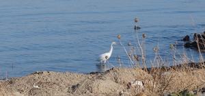 Beyaz balıkçıl kuşu vatandaşların ilgi odağı oldu