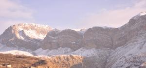 Artvin'de yaban keçisi envanteri çıkarıldı