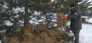 Çankırı'da yaban hayvanları için yemleme çalışması