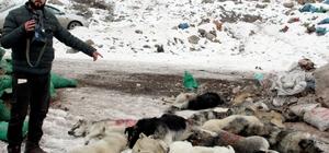 Hakkari'de şehir çöplüğündeki köpek leşleri görenleri hayrete düşürüyor