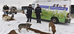 Büyükşehir'den, sokak hayvanlarına yem desteği