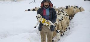 Ovacık'ta kar yağışı hayvancılıkla uğraşanları da etkiliyor