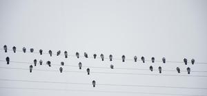 Elektrik tellerine dizilen güvercinler notaları andırdı