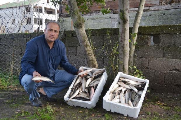 Halep'e 100 kilo balık desteği