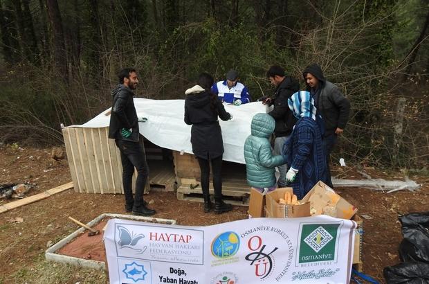 Osmaniye Belediyesi ve OKÜ öğrenci kulüpleri, sokak köpeklerine kulübe yaptı