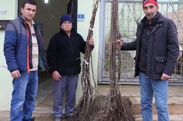 Meyve fidanları Nilüfer Belediyesi'nden