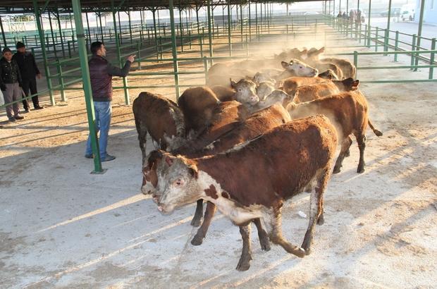 Genç çiftçilere hayvan desteği