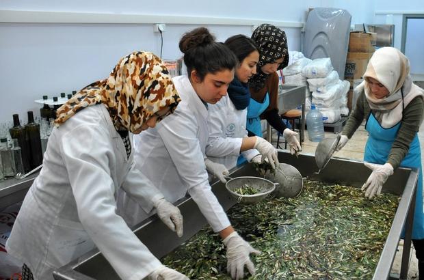 NEÜ Gıda Mühendisliği Bölümü zeytinyağı üretmeye başladı