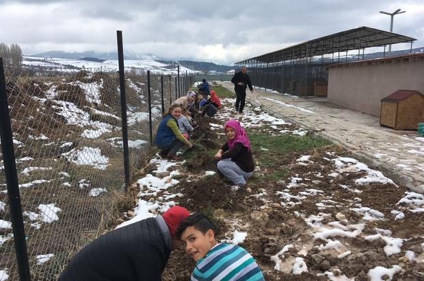 Gölpazarı'da öğrenciler şehitler için fidan dikti