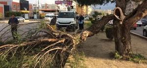 İskenderun'da fırtına ağaçları devirdi