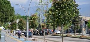 Erbaa Belediyesi 600 ağaç dikti
