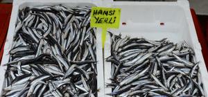 Balıkçılar yeni yılda hamsiden umutsuz