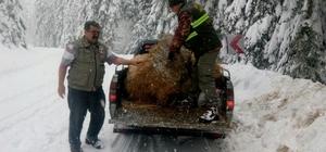 Kastamonu'da yaban hayvanları yemleniyor