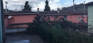 Okul yakınına devrilen ağaç korkuttu