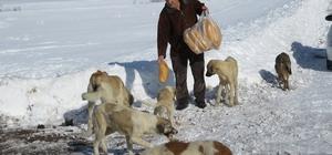 Sahipsiz köpekleri ekmekle besliyor