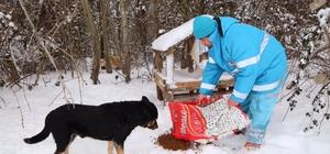 Çekmeköy Belediyesi karda sokak hayvanları için seferber oldu