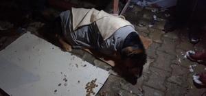 Donmak üzere bulunan köpek son anda kurtarıldı