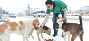 Büyükşehir'den, 2016'da sokak hayvanları için 5 milyon TL'lik harcama
