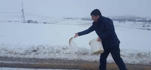 Tufanbeyli'de yaban hayvanlarına yem bırakıldı