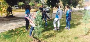 Öğrenciler çam ağaçlarına kendi isimlerini verdi