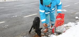Çekmeköy'de sokak hayvanları unutulmadı