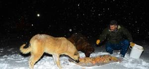 Beylikdüzü, karda sokak hayvanlarını unutmadı