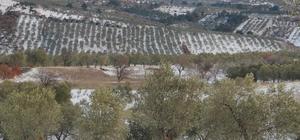 Burhaniye'de zeytin hasadına kar ve soğuk molası