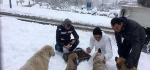 Ataşehir'in can dostları emin ellerde