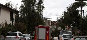 Fethiye'de fırtına ağaçları devirdi