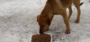 Gördes Belediyesi sokak hayvanlarını unutmadı