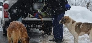 Dilovası'nda sokak hayvanlarına yardım eli