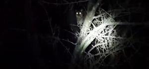 Sakarya'da yaban kedisi görüldüğü iddia edildi
