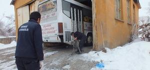 Malazgirt'te sokak köpekleri kısırlaştırılıyor