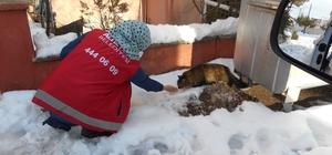 Sokak hayvanlarına Altıeylül şefkati