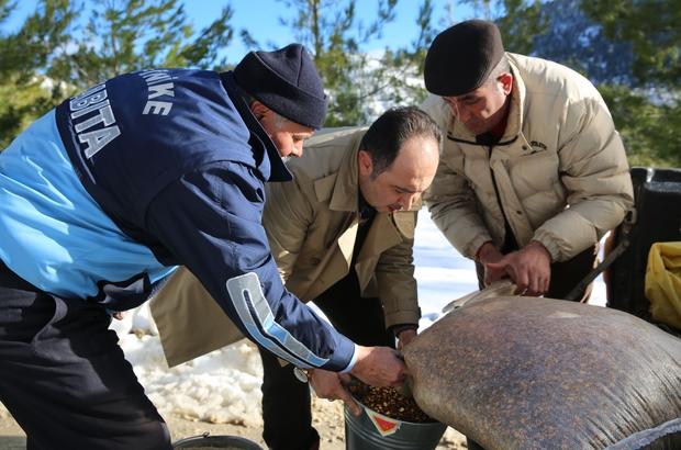 Finike Belediye kış şartlarında yiyecek bulmakta zorlanan vahşi hayvanların geçiş güzergahlarına yem bıraktı.