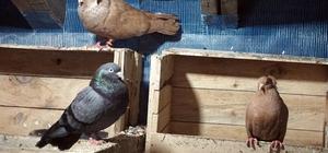 """Güvercinlere soğukta """"ısıtıcılı koruma"""""""