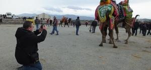 Deve güreşini fotoğraflamak için Çanakkale'den geldi