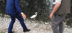 Yabani kuşlar tedavi edildikten sonra doğaya bırakılıyor