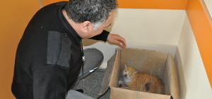 Yaralı kediye hastane personeli sahip çıktı