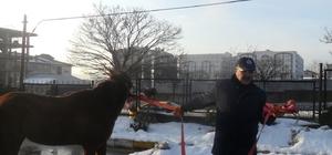 Gebze'de sahipsiz hayvanlar toplanıyor